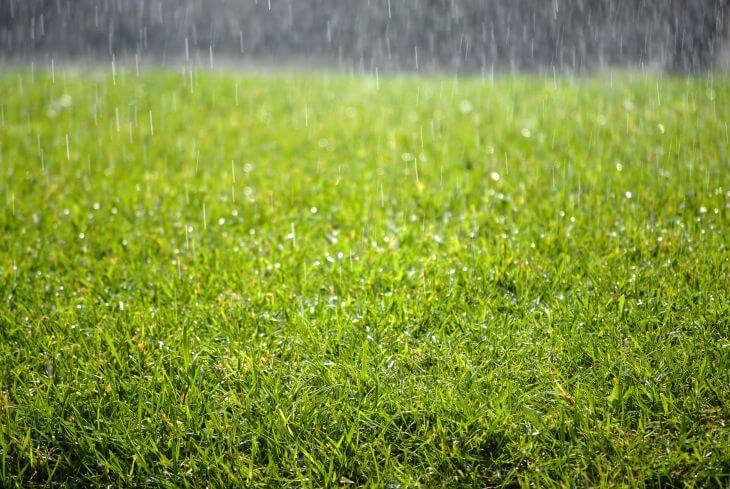 Wet lawn in the rain.