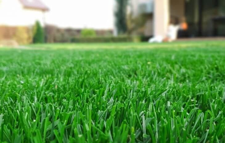 Lush lawn after dormant grass reviving.
