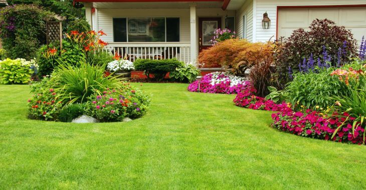 A beautiful front yard lawn after grass reviving.