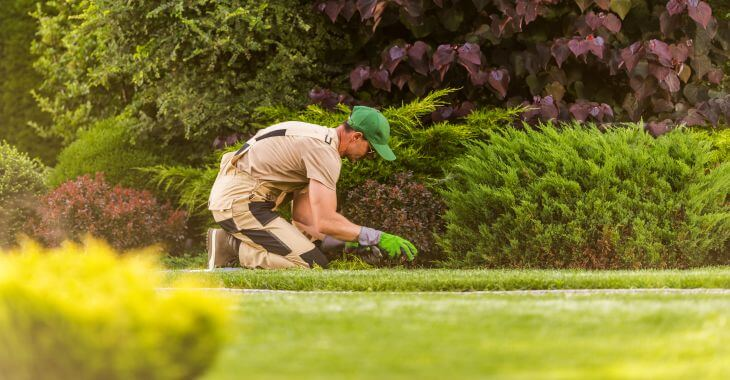 A professional landscaper checking the lawn and plants in the yard for weeds.