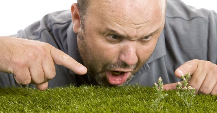 Frustrated man looking at new weeds on his lawn and wondering what kills weeds permanently.